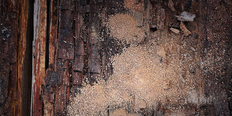 How to Prevent Wood from Rotting?