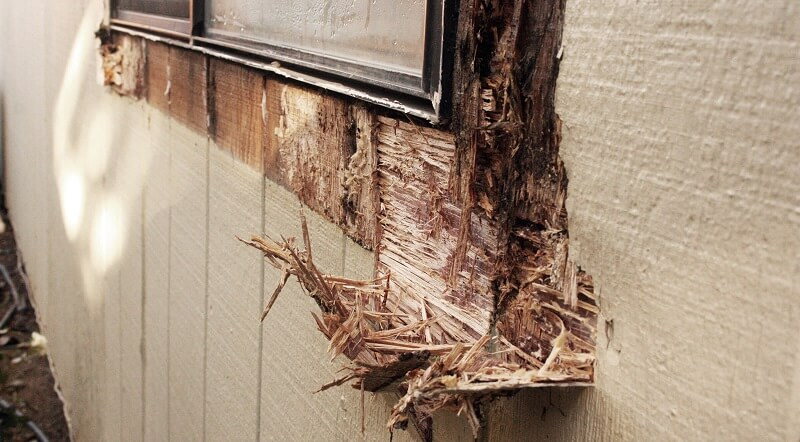There are many types of wood rot.