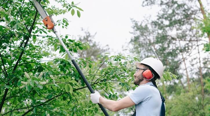 People also use pole saws to remove excess branches