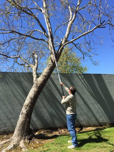 Pole saw is the best tool for cutting overhead branches