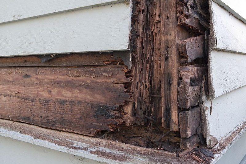 How to Repair Rotted Wood? Useful Tips You Need To Know