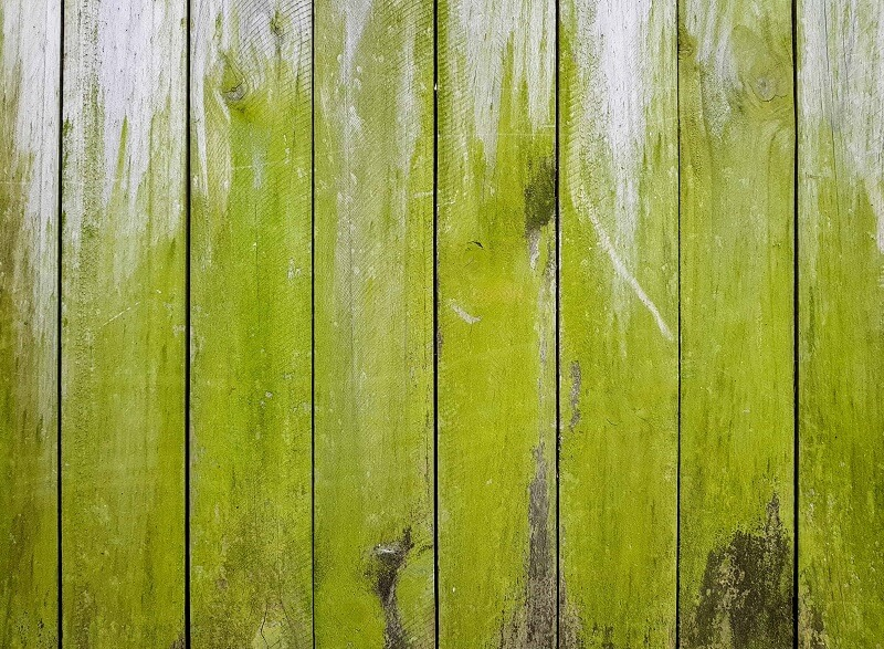 How To Remove Algae From Deck